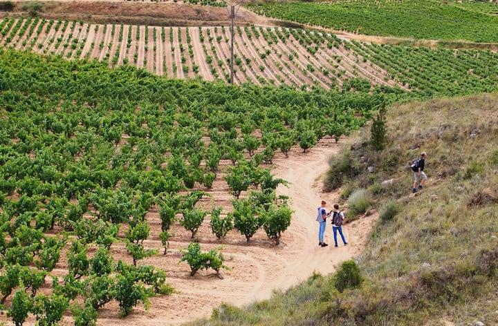 A nice walk through the vineyards
