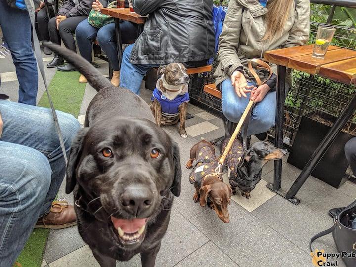 Doggos at pubs