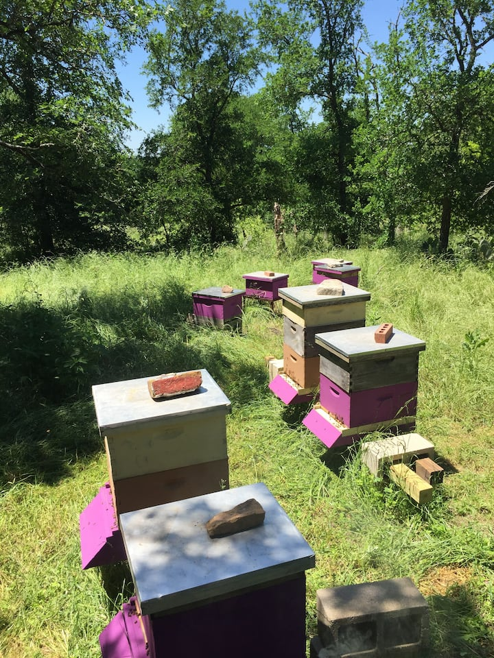 Our apiary of 8 healthy beehives.