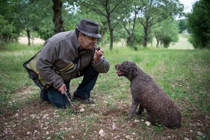 Suivez Elfe dans sa recherche de truffes