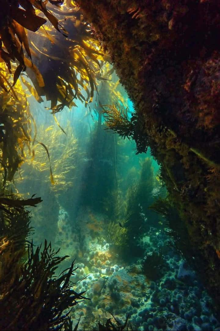 Peeking into the magical kelp forest