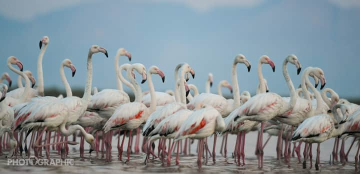 Flamingo photography in winter months