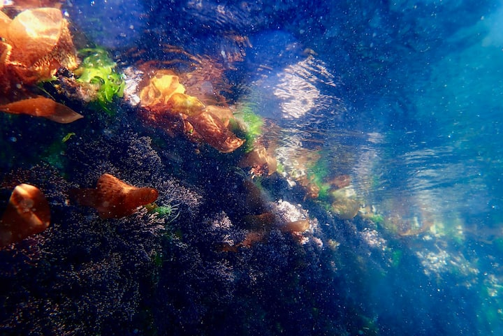 Underwater canvas