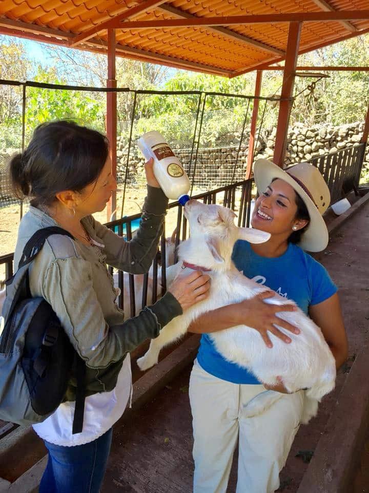 Bottle feeding  a baby goat!