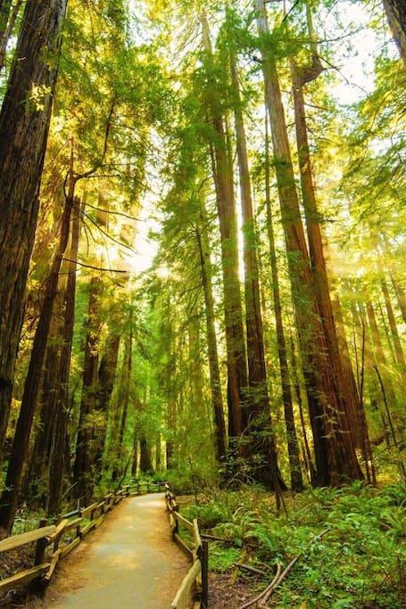 Explore SF, Muir Woods + Sausalito!