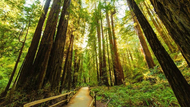 Beautiful Muir Woods