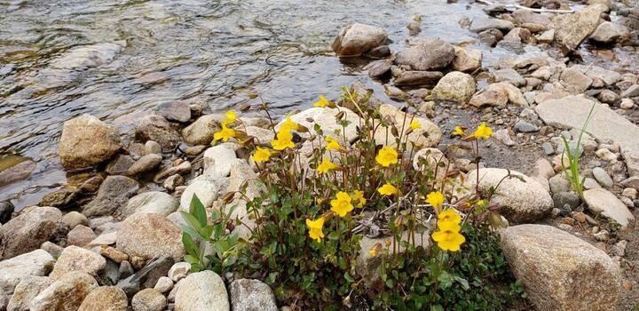 Beautiful wildflowers in the area