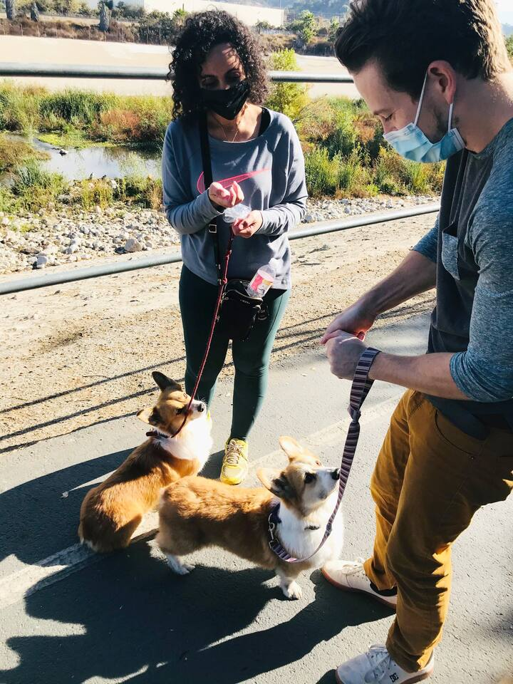 corgis enjoy socially distanced treats
