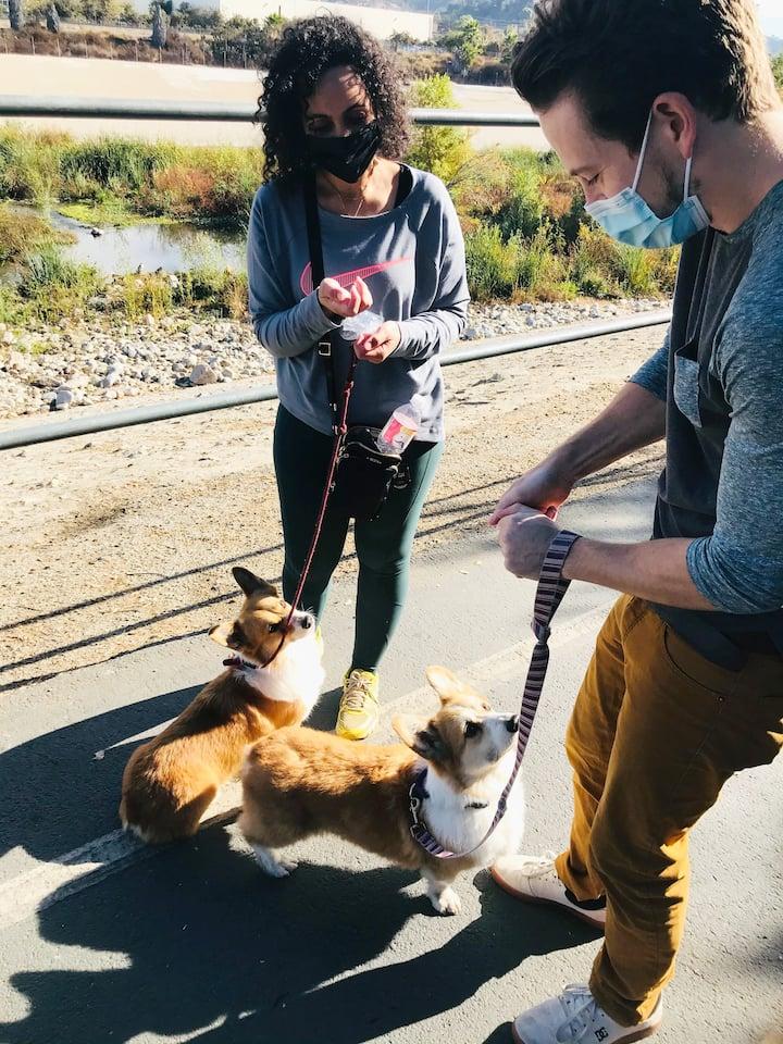 corgis enjoy socially distanced treats