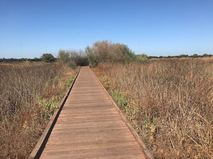 Wetland boardwalk