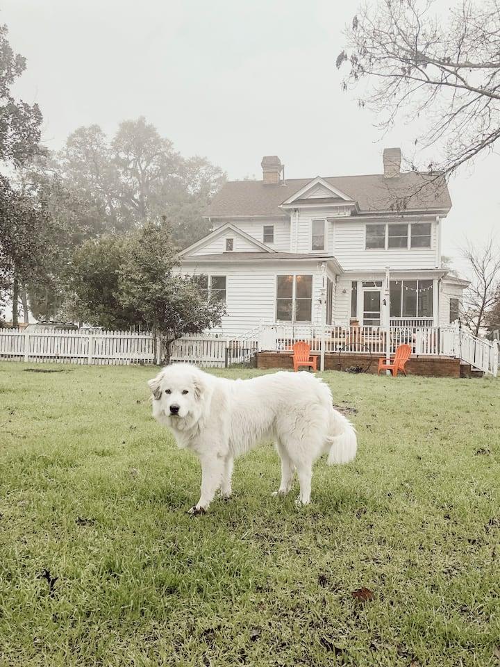 Our farm dog, Winter!