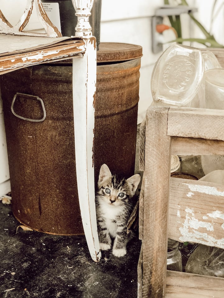 We have some barn kittens too!