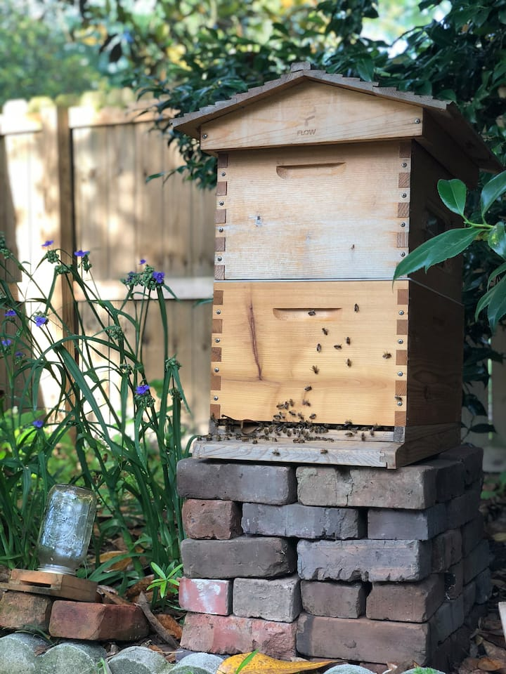 One of our two beehives