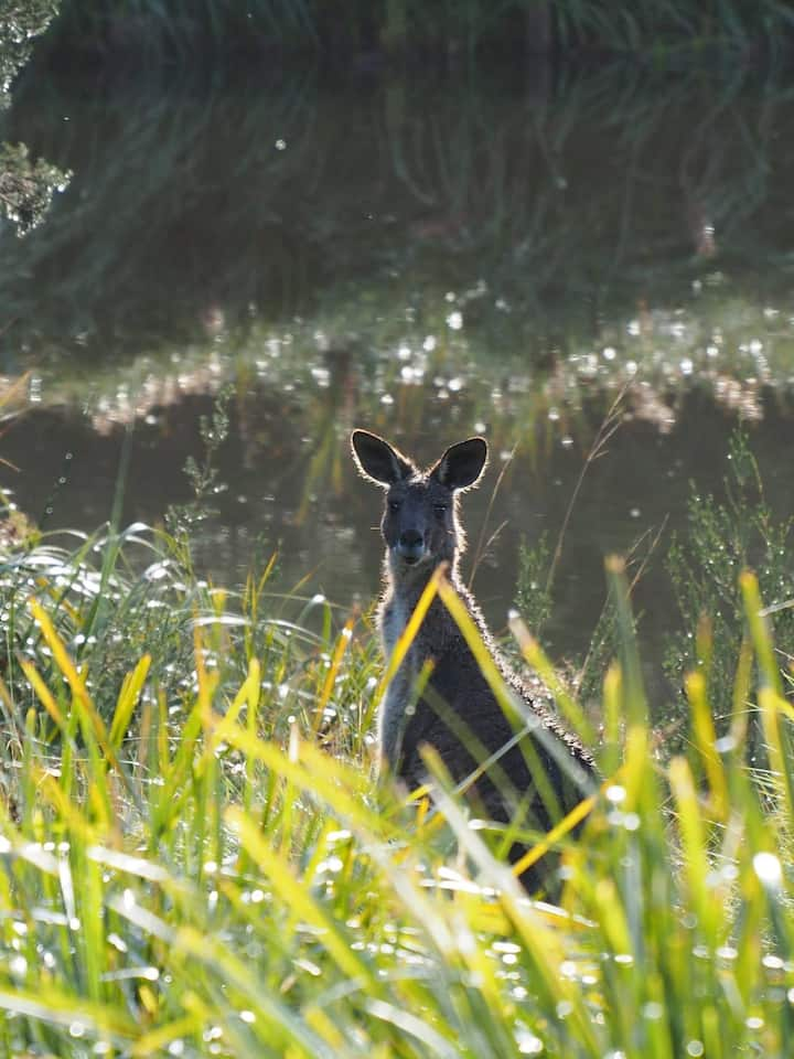 Briars Park Wildlife Sanctuary