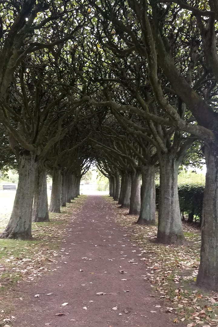 A grove in the city