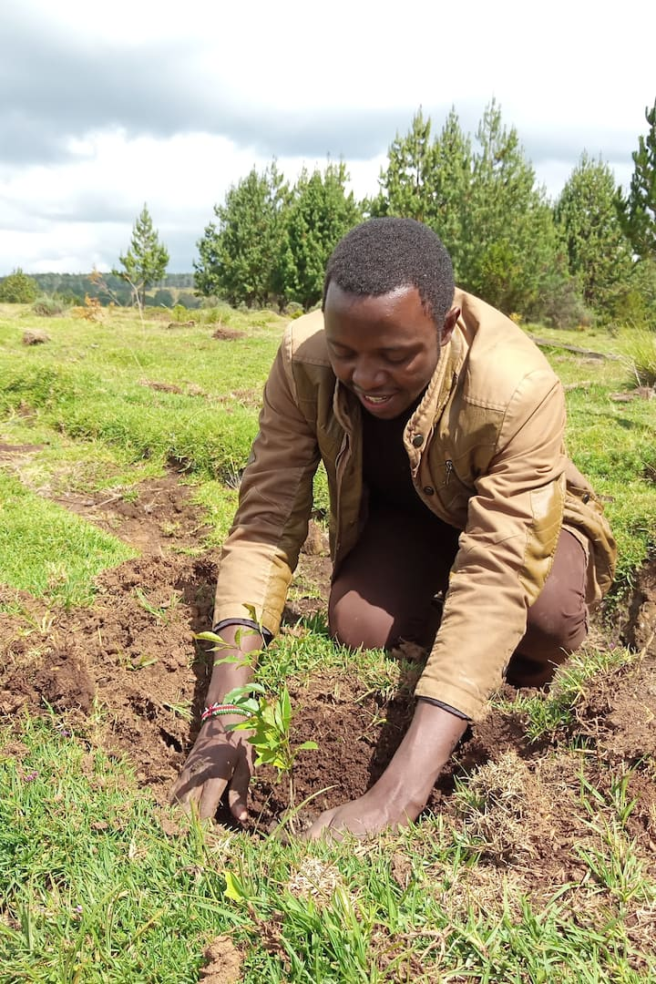 Samson, doing tree planting in Mauforest