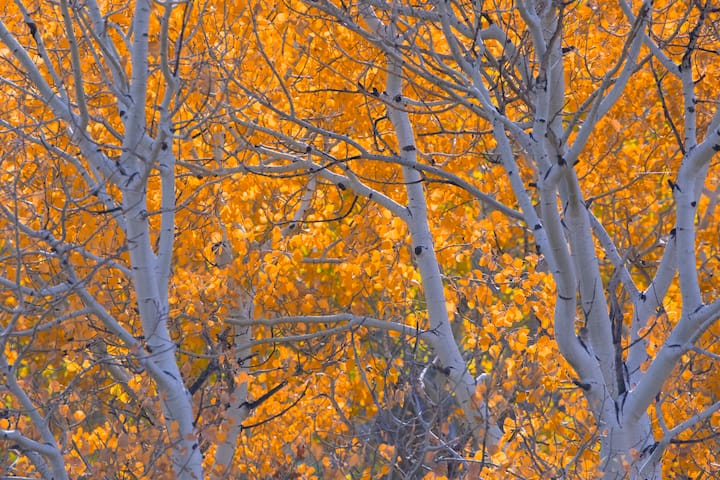 capture the seasons in Boulder
