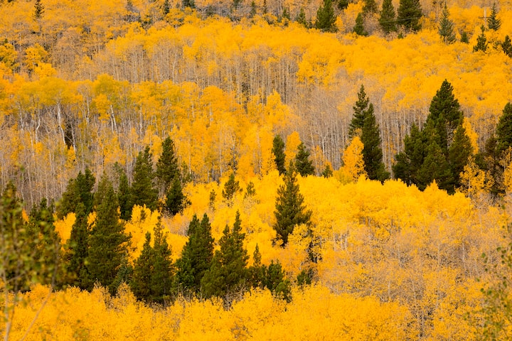 photograph fall colors in Boulder