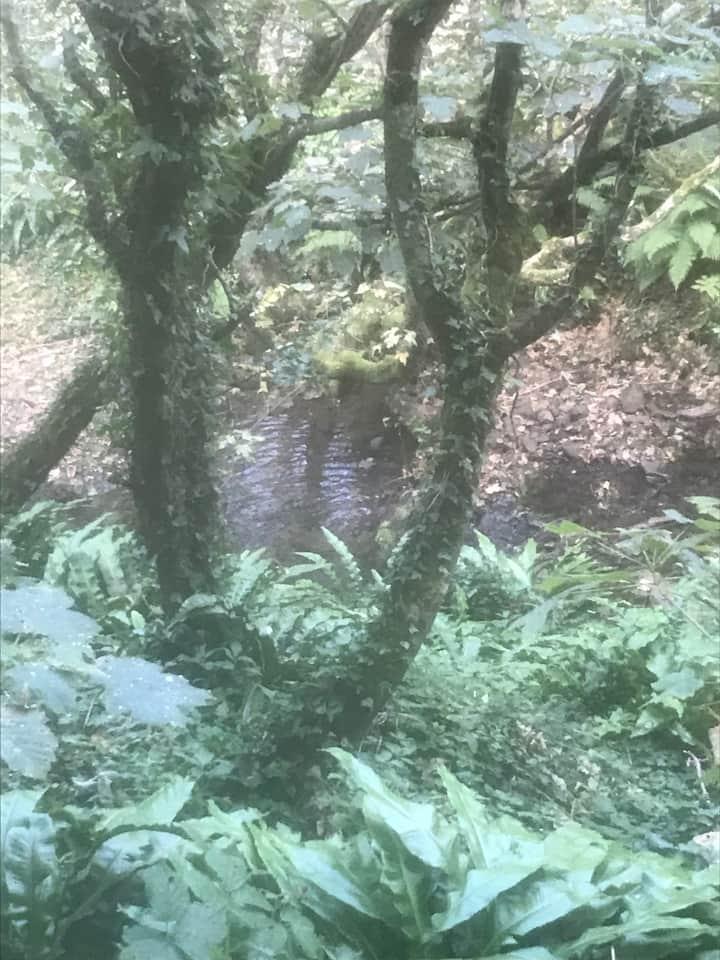 On the woodland walk to Penbryn