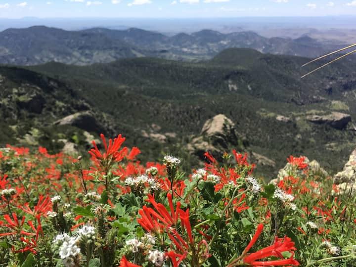 Wildflowers in August.