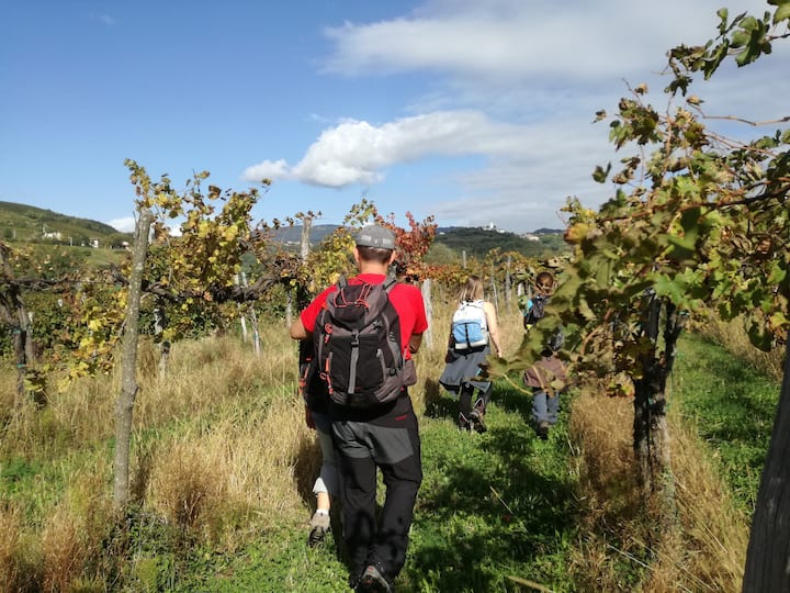 Hiking through the vineyards in Brda