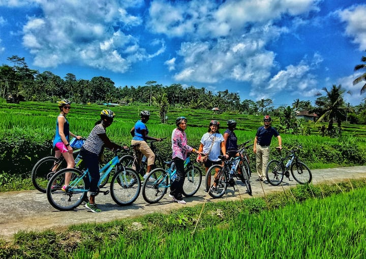 through  the rice fields