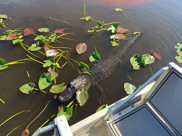 Look out for Gators