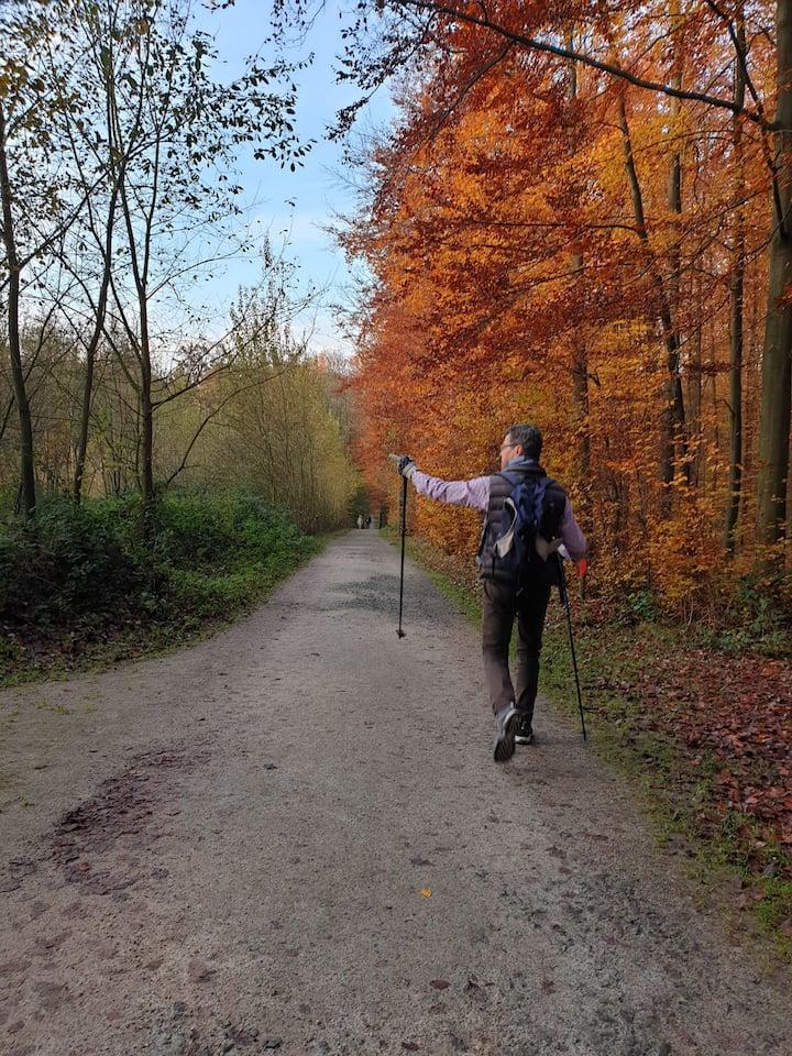 Autumn Colors - Dréve Lorraine