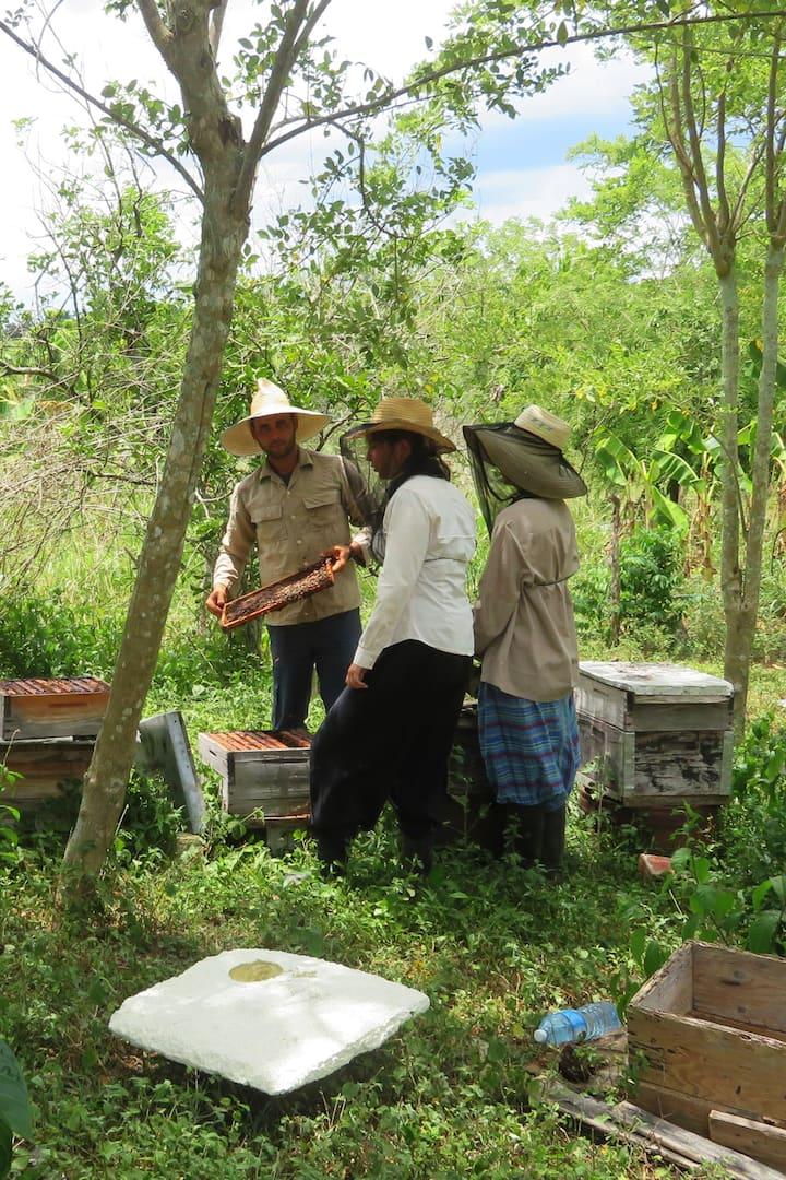 Reconociendo el apiario