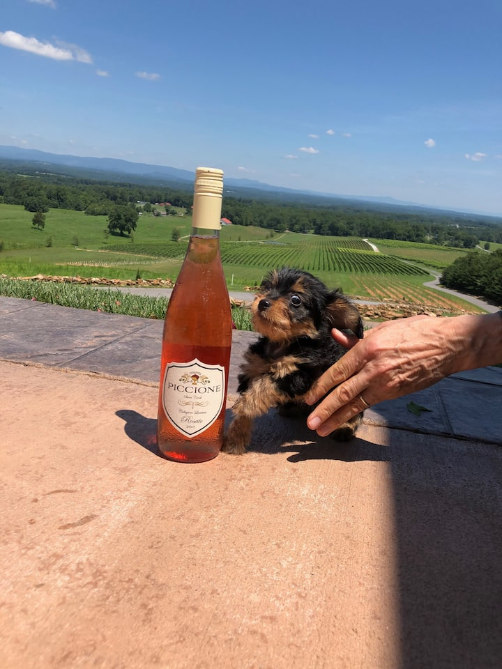 Harry the Wine Dachshund