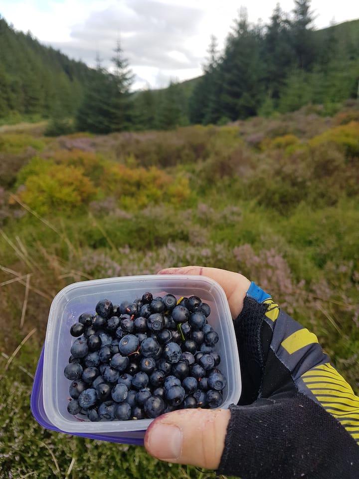 Wild Fraughan Berries