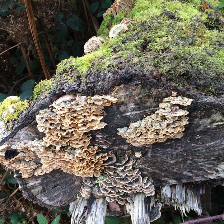 Beautiful funghi on the meditation walk