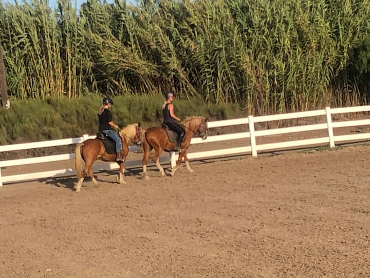 Trail horses Pooh Bear and Piglet