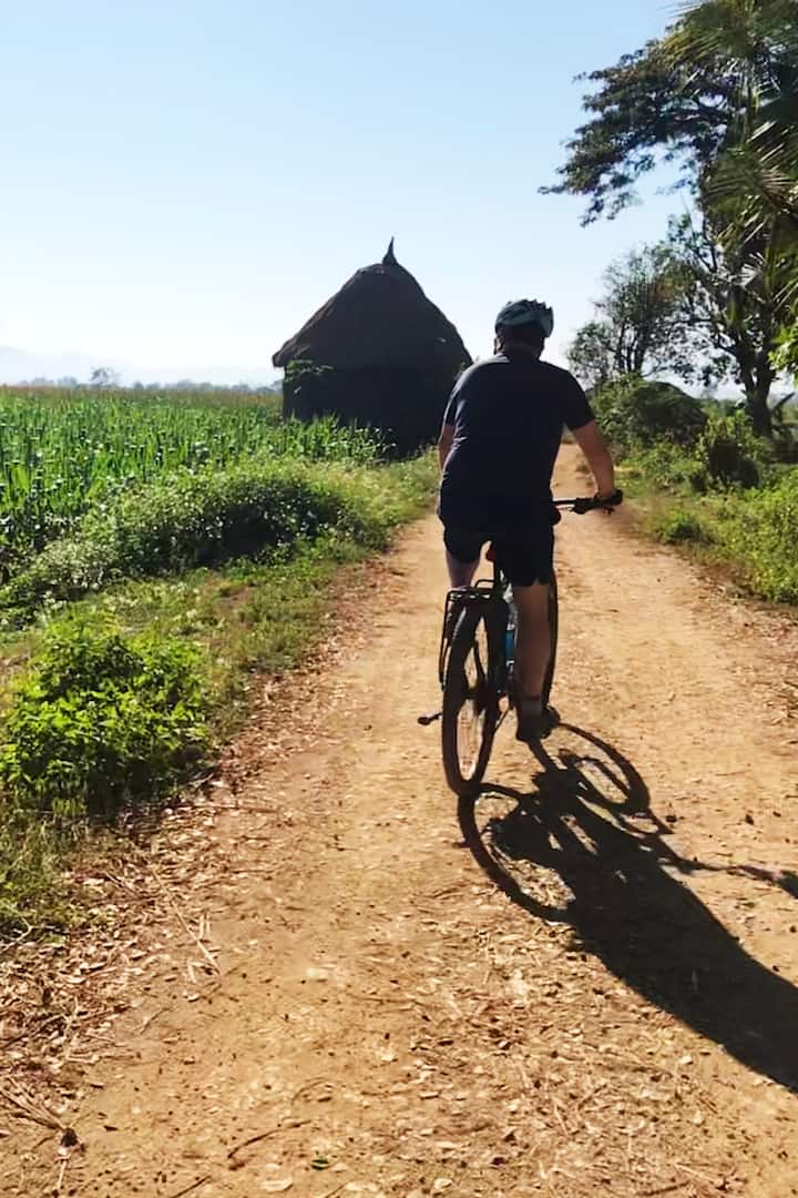 Cycling through rice fields.