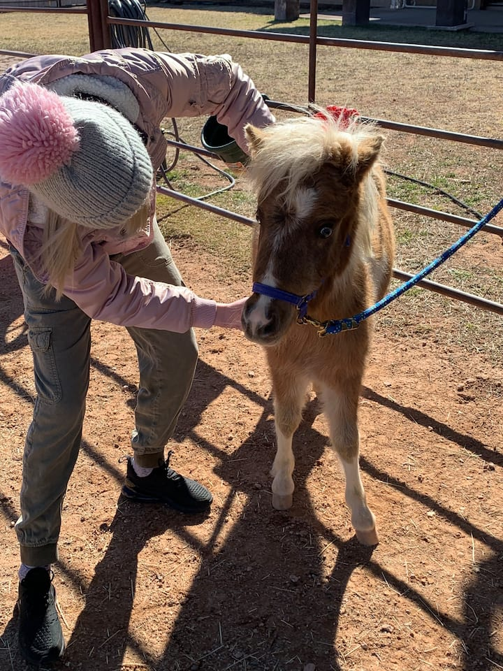 Brushing the miniature horse Opal