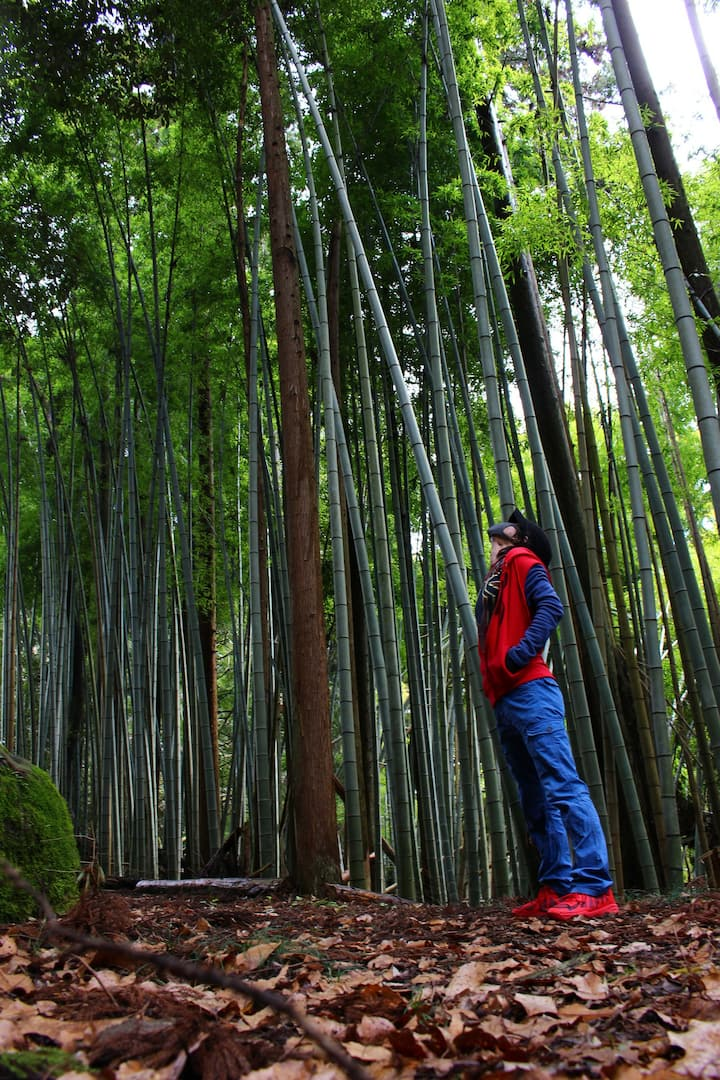 竹林の中にある小道