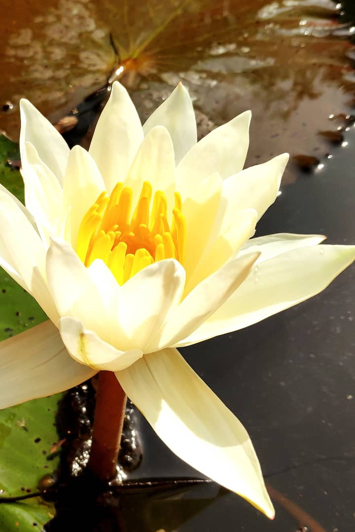 In the lotus ponds