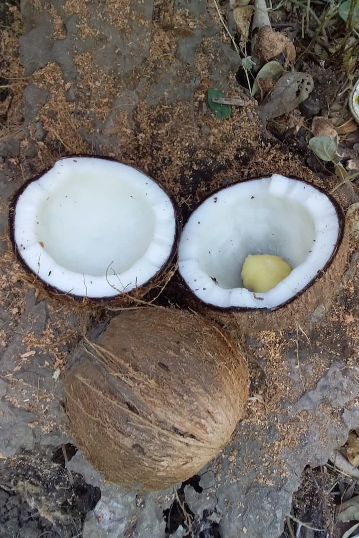 from local coconut