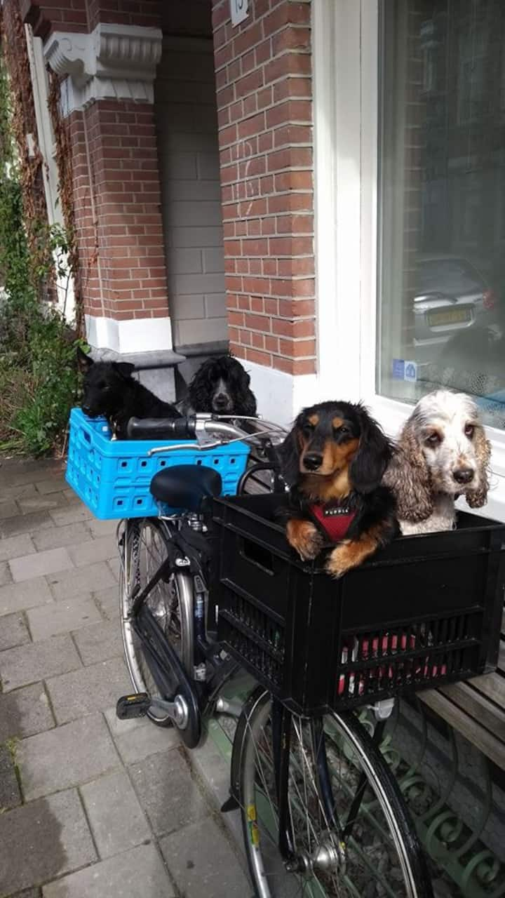 Now that's what we call a biker gang!