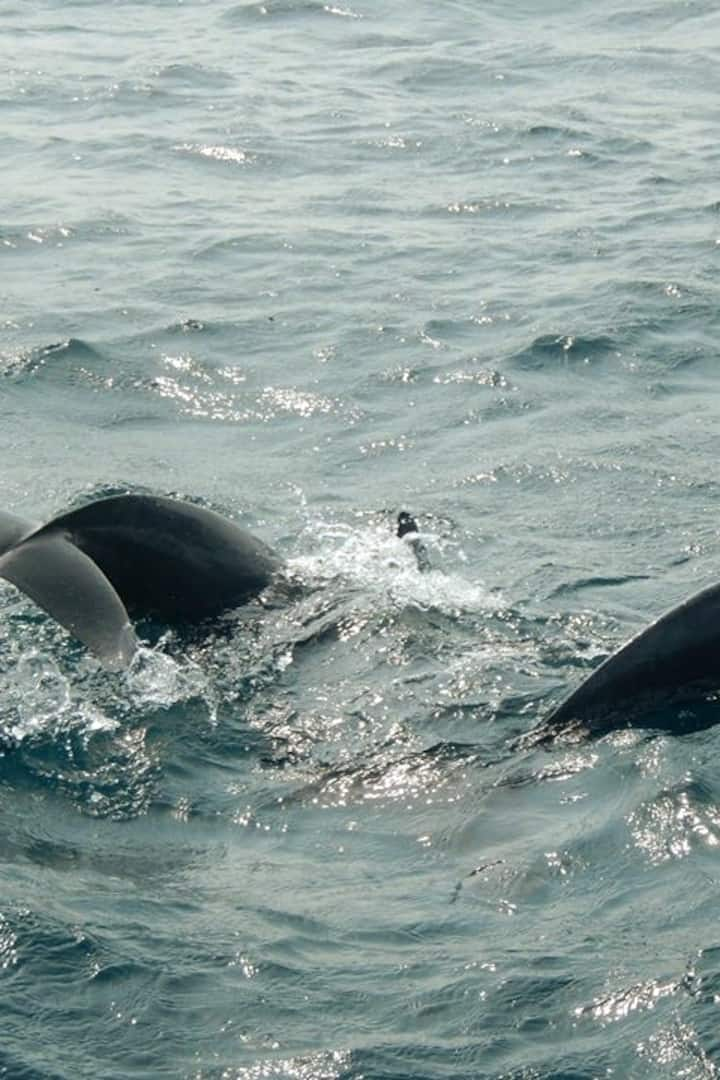Dolphins almost on Board