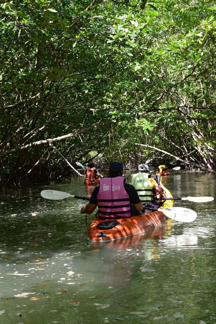 Explore the lush green mangrove forest