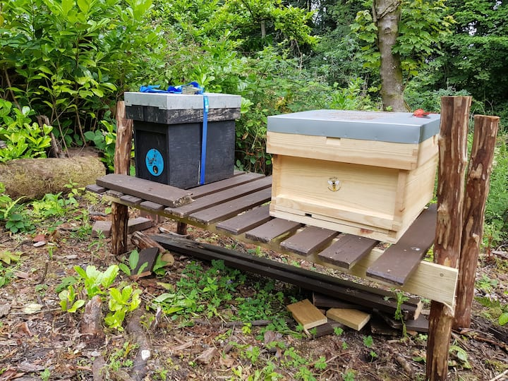 Two of our bee hives