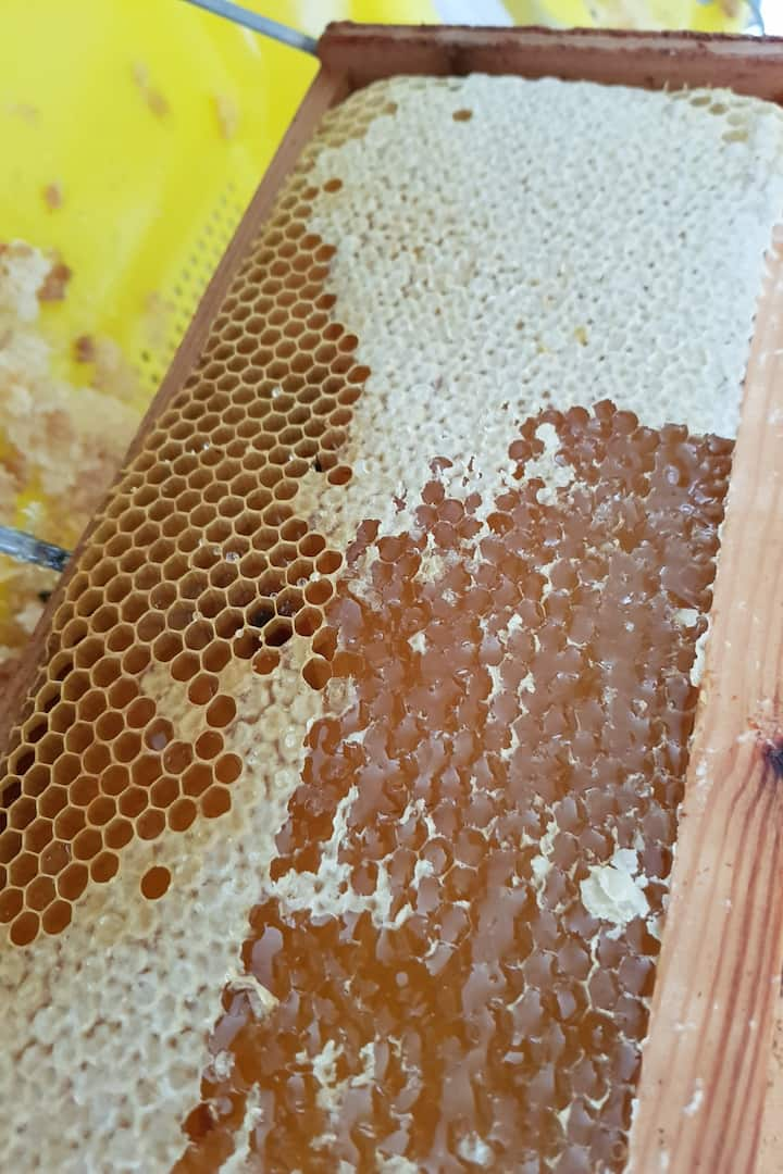 honeycomb with capped & uncapped honey