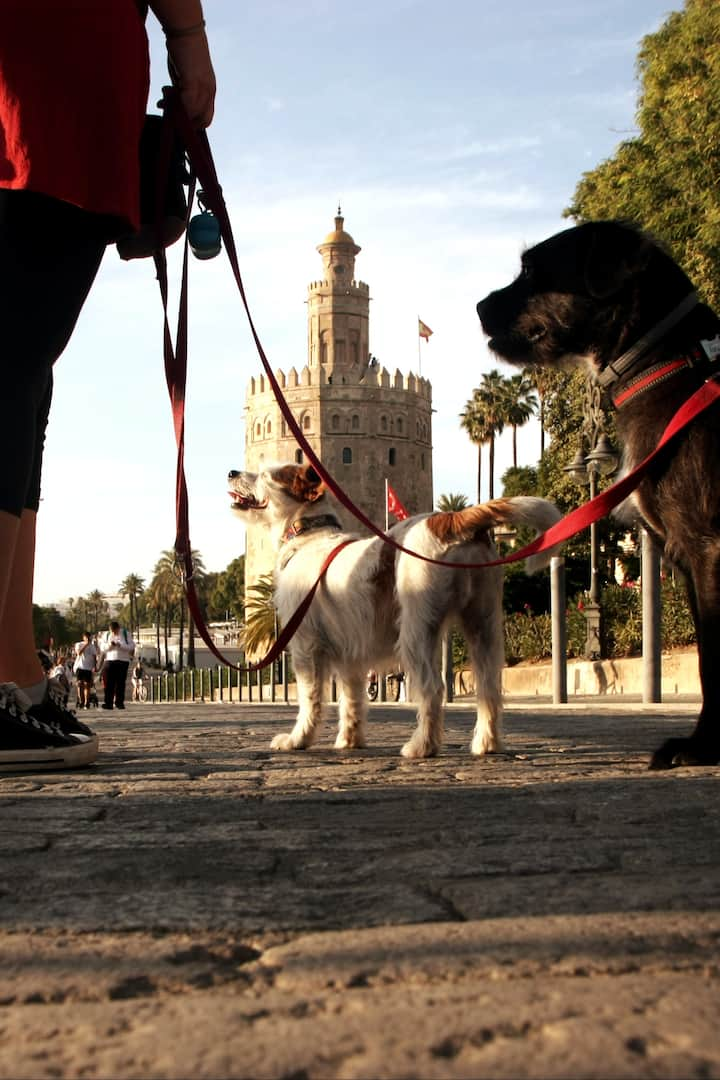 Torre del Oro with dogs