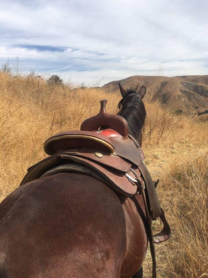 Western tack is more suited to long ride