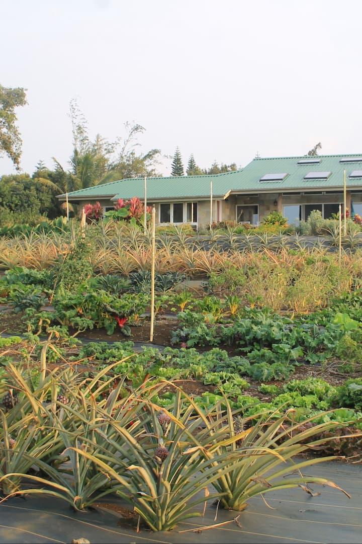 Lokahi Vegetable bounty