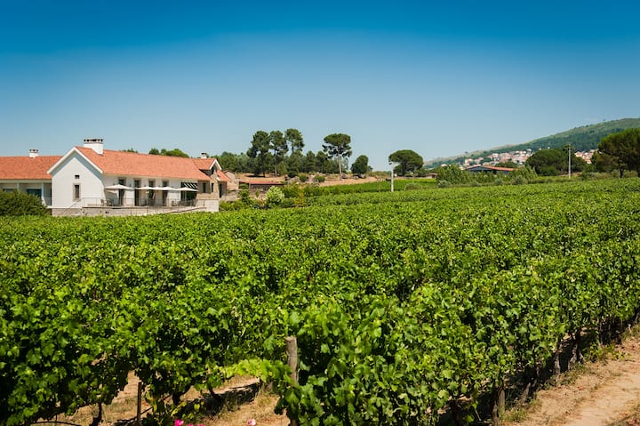 Award-winning vineyards