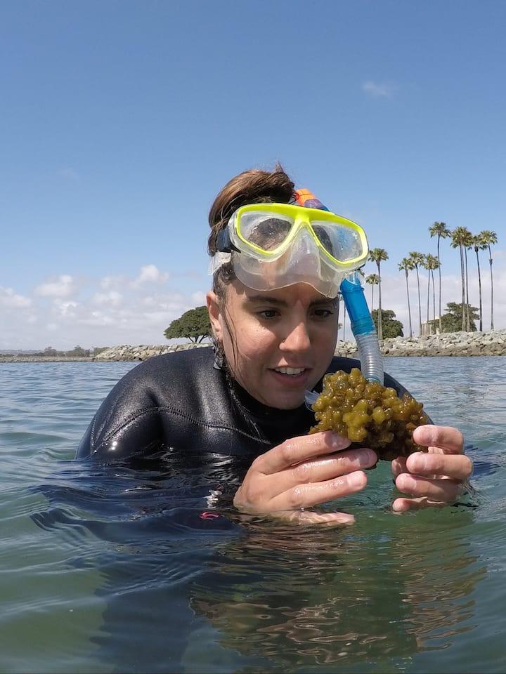 Taking a closer look at algae!