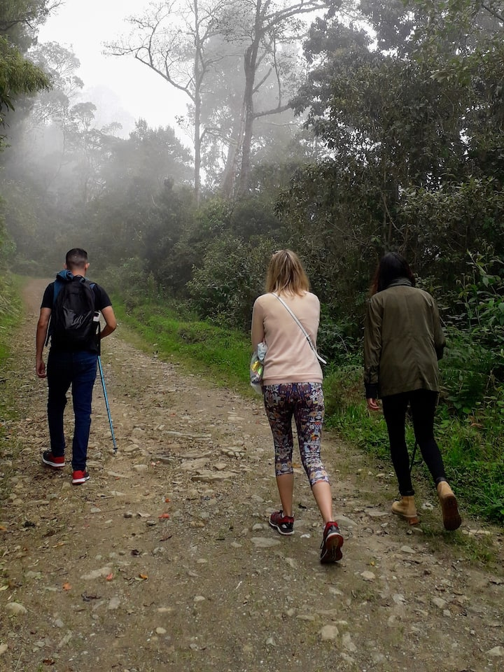 Walking the cloudforest