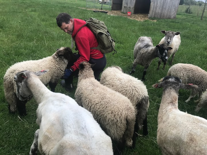 Getting close to sheep like never before